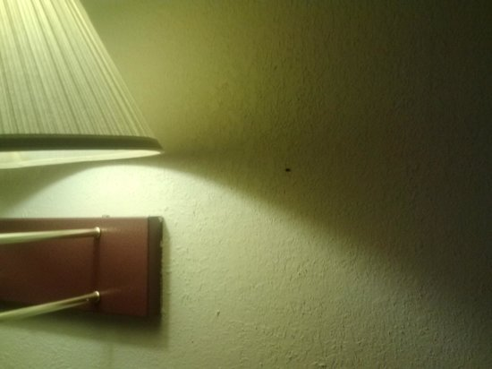 Days Inn Kansas City International Airport: The wall by the bed