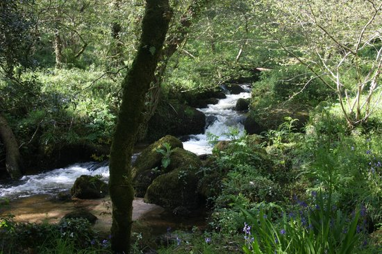 Little Trethvas Camping and Touring Site: local walks to river creek