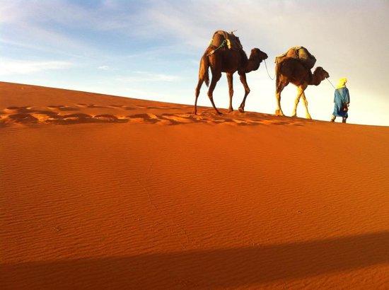 Cultura Travel Morocco - Day Tours: DESERTO