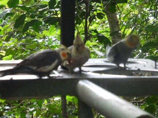 Birds of Eden: Lovebirds