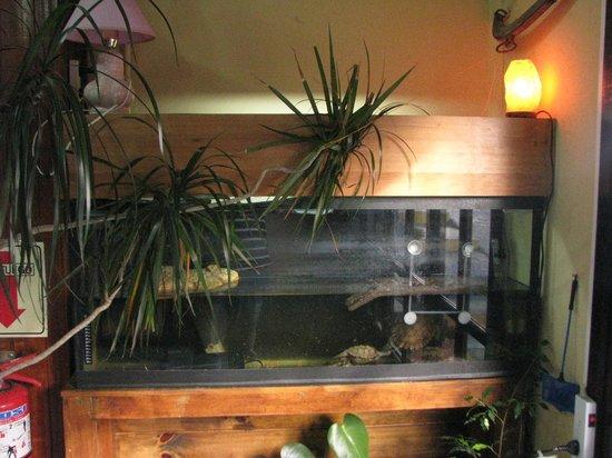Hostel Backpackers Refugio Del Mochilero: turtles pool