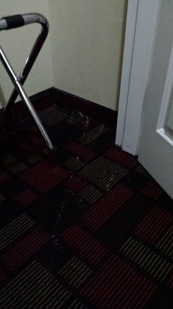 Wingate by Wyndham Lake Charles Casino Area: White crusty throw up on the carpet at the wingate lake charles...my room was disgusting and the