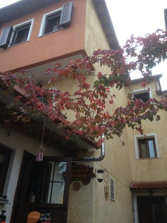 Studios Arabas: a nice red plant next to arabas lounge bar