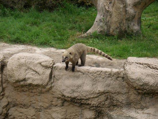 Zoo de la Palmyre : Zoo Palmyre