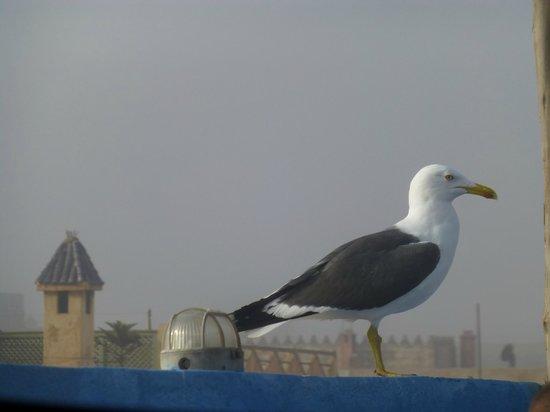 Riad Le Grand Large: Un goéland attendant son petit déjeuner