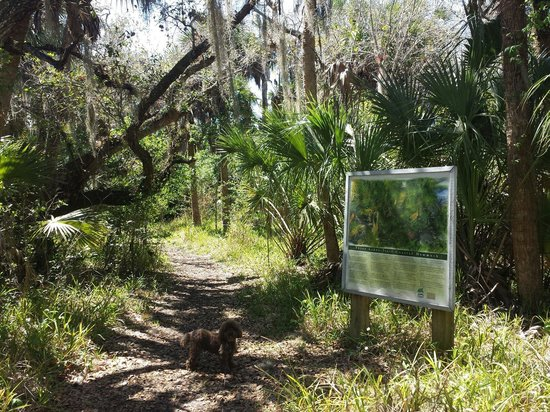 Alligator Creek Preserve: Great trails each about a mile long or more.