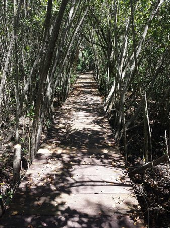Alligator Creek Preserve: Boardwalks take you over the soft muddy areas.