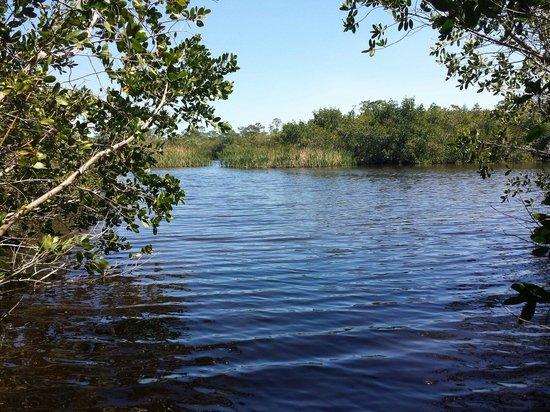 Alligator Creek Preserve: The third lake in Three Lake Trail.