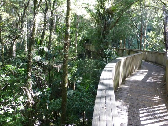 AH Reed Kauri Park (Whangarei) - 2018 All You Need to Know Before You Go (with Photos