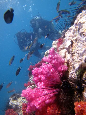 Merlin Divers - Kamala Diving Center: plongee corail