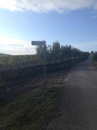 Agriturismo Castello della Paneretta: arredores