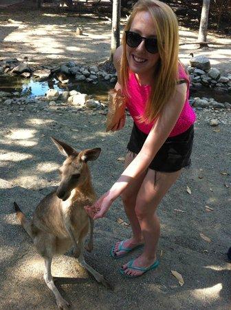 Wildlife Habitat Port Douglas : Amazing