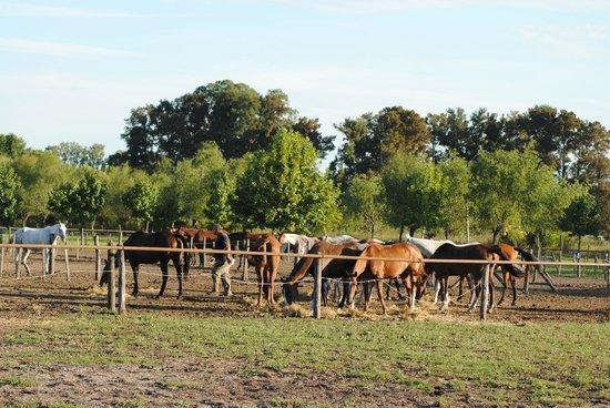 Argentina Polo Day : enclos