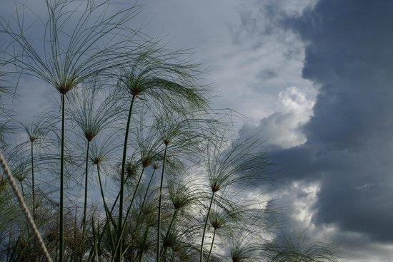 Wilderness Safaris Xigera Camp: Papyrus