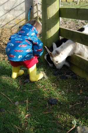 Pollaughan Holiday Cottages : Morning animal feeding