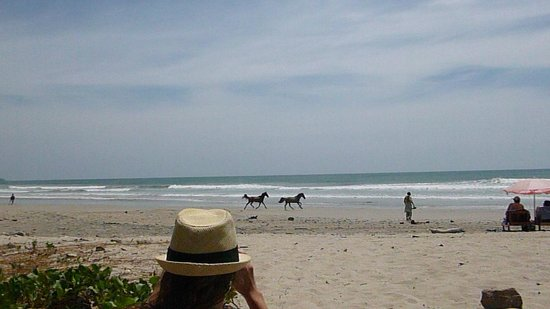 Restaurant Pizzeria Playa Carmen: Wild horses running on the beach directly in front of restaurant