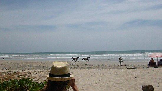 Restaurant Pizzeria Playa Carmen: Wild horses running on the beach directly in front of restaurant
