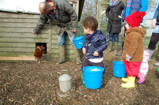 Pollaughan Holiday Cottages: Collecting eggs!