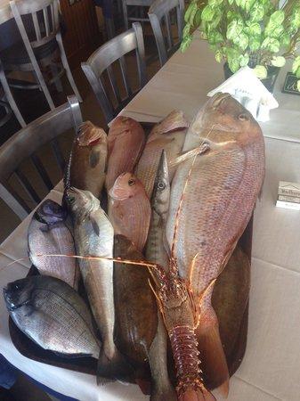 Marina Seafood : Το πακέτο εινε για να δείτε το μέγεθος των ψαριών !!