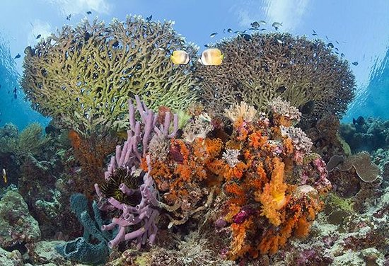 Wakatobi Dive Resort: Wakatobi's shallow reefs are within easy access, with the house reef just steps from the beach.