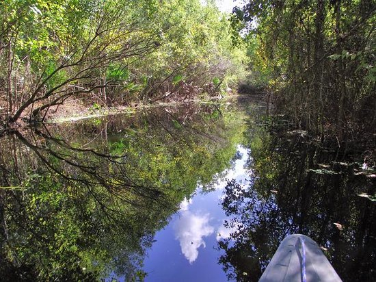 Palmetto Island State Park : From the canoe