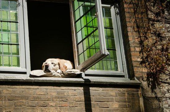 Boottochten Brugge : Foto do famoso cachorro de Bruges