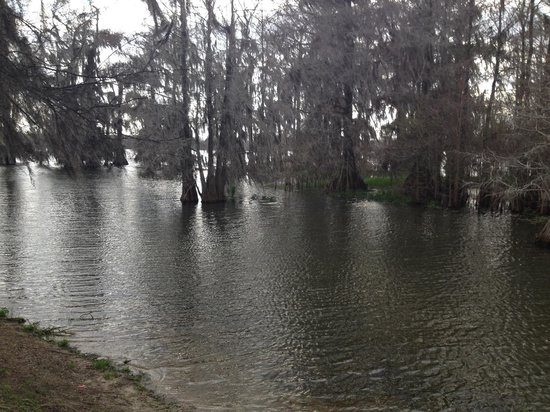 Lake Martin Rookery