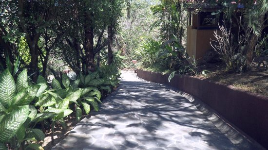 Hotel Vista de Olas: driveway down to our hotel path and up to pool/lobby/rest.. was a workout! lol