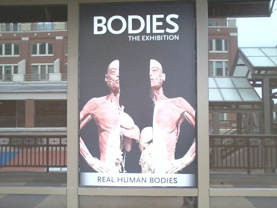 Read Reviews of Atlantic Station  Bodies The Exhibition