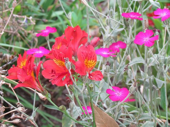 La Posada del Quinde : some of the bright flowers