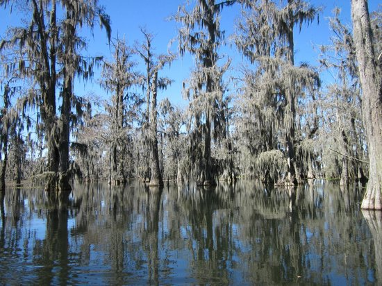 Champagne's Cajun Swamp Tours : Lots of Spanish Moss