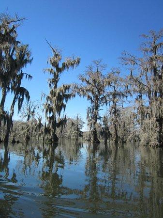 Champagne's Cajun Swamp Tours : Beautiful day