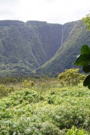 Waipio Valley Lookout: View from kings trail.