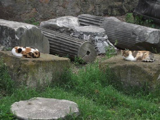 Piazza Vittorio Emanuele II: Várias colunas coríntias que faziam parte do Ninfeu. Há muitos gatos no local.