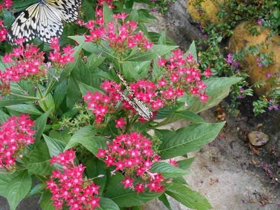 Butterfly Park & Insect Kingdom: One of the few species left in the Kingdom