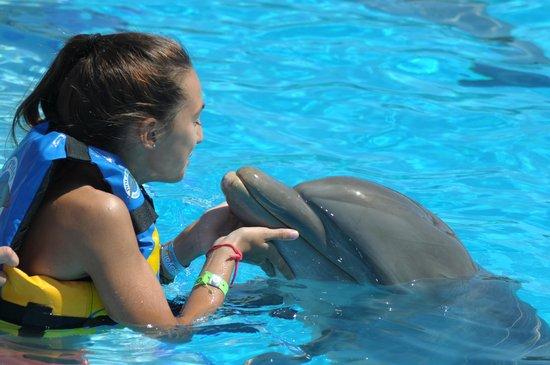 Dolphin Discovery Puerto Aventuras: hermoso