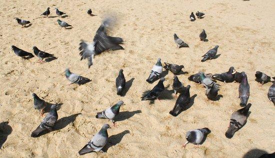 Haeundae Beach: 海雲台
