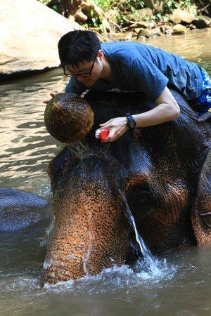 Patara Elephant Farm - Private Tours : shower of the elephant