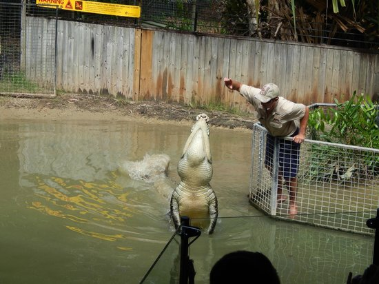 Hartley's Crocodile Adventures : Croc Show