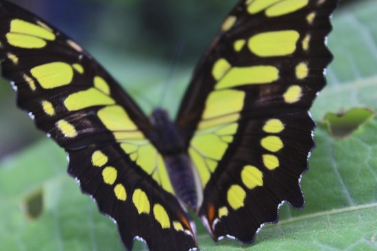 Los Lagos Hot Springs : Lots of colorful butterflies in the garden