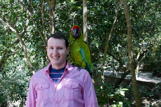 Gumbalimba Park: A friendly green macaw