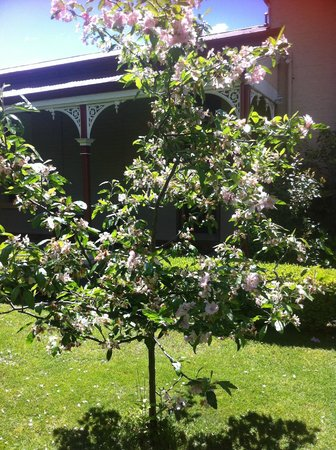 Longford Boutique Accommodation : Spring blossoms