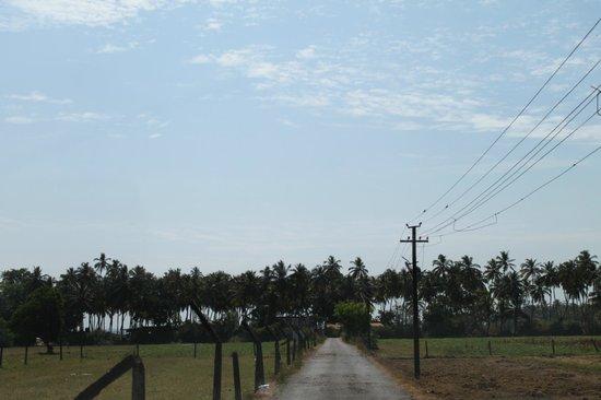 Coco Beach: Narrow lane leading to the beach