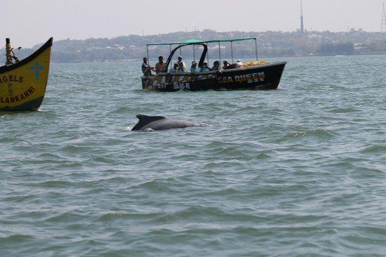 Coco Beach: And Dolphin