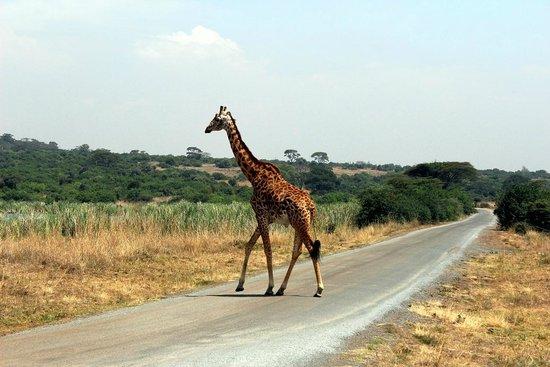 Parc national de Nairobi : Nairobi National Park