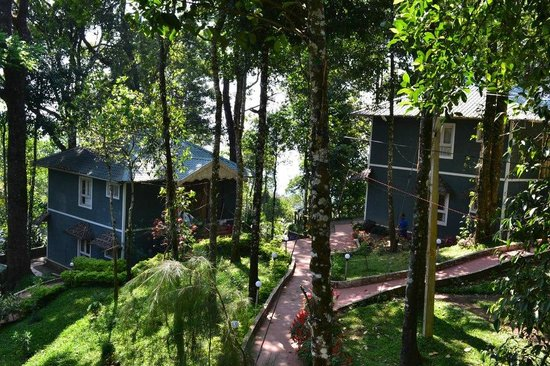 Blue Bells Valley Resort : bluebells tree house view
