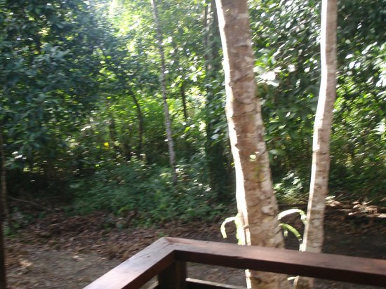 Bilit Rainforest Lodge: Rain forest at your door