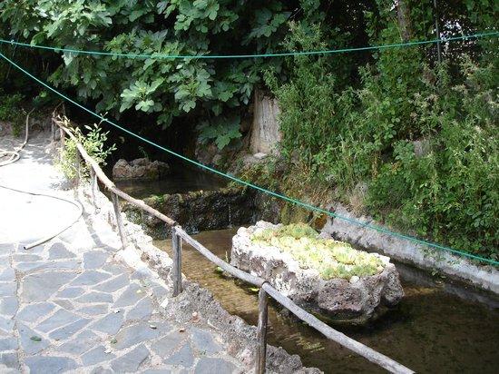 El estanque de truchas picture of chorros rio mundo for Estanque de truchas