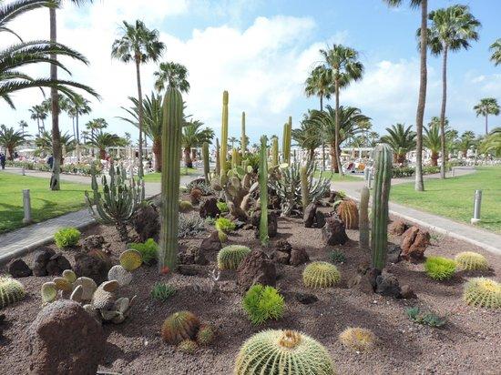 ClubHotel Riu Gran Canaria: Cactus Garden