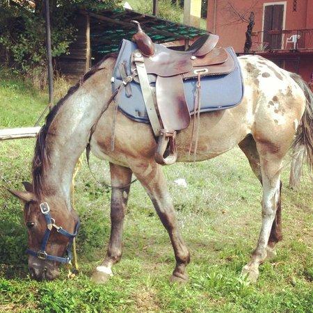 Agriturismo Scuderia Castello: Eines der bestens (!) ausgebildeten Pferde des Hofes